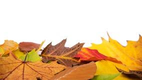 Изолированные листья осени Стоковые Фотографии RF