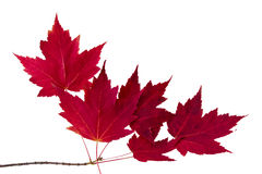 Изолированные листья Стоковые Фотографии RF