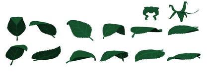 изолированные листья Стоковая Фотография