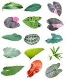 Изолированные лист листвы Стоковое фото RF