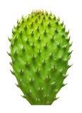 Изолированные лист кактуса Стоковое фото RF