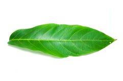 Изолированные лист Стоковое Фото