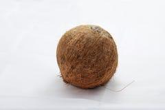 Изолированные кокосом кокосы белого плодоовощ завода тропические Стоковые Фотографии RF
