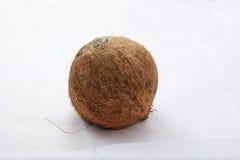 Изолированные кокосом кокосы белого плодоовощ завода тропические Стоковые Изображения RF