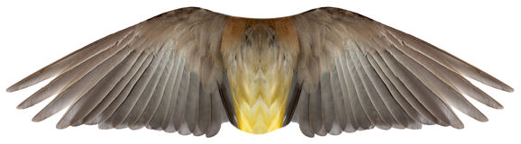Изолированные крыла пера птицы или Анджела Стоковое Фото