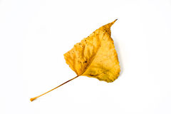 Изолированные оранжевые лист осени Стоковое Изображение RF