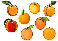 Изолированные оранжевые сладостные плодоовощи абрикосов Стоковое фото RF