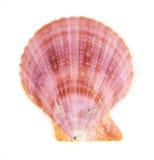 изолированные раковины наяды clam Стоковые Изображения RF