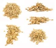 Изолированные раковины семени тыквы Стоковые Изображения