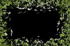 Изолированные рамки Стоковое Изображение