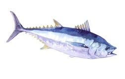 Изолированные рыбы акварели одиночные salmon Стоковая Фотография RF