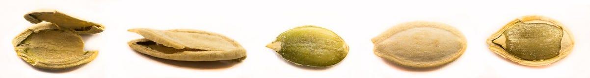 изолированные семена тыквы Стоковое Фото