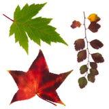Изолированные установленные листья осени Стоковая Фотография RF