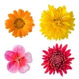 Изолированные установленные цветки Стоковая Фотография