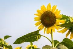 изолированные цветки греют на солнце белизна Стоковые Изображения