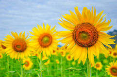 изолированные цветки греют на солнце белизна стоковая фотография rf