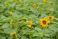 изолированные цветки греют на солнце белизна Стоковые Фото