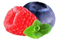Изолированные ягоды и мята на белой предпосылке Стоковые Изображения RF