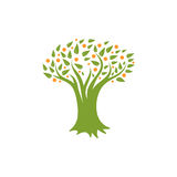Изолированный абстрактный зеленый цвет, оранжевый логотип дерева цвета Естественный логотип элемента Листья и значок хобота Знак  Стоковые Изображения RF