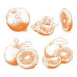 Изолированный апельсин, оранжевый вектор Состав апельсина Стоковые Фотографии RF