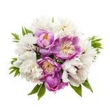 Изолированный букет цветка пиона Стоковое фото RF