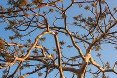 изолированный вал Стоковая Фотография