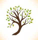 Изолированный вектором завод дерева декоративный стилизованный Стоковые Изображения RF