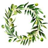 Изолированный венок оливкового дерева в стиле акварели иллюстрация штока
