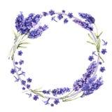 Изолированный венок цветка лаванды Wildflower в стиле акварели иллюстрация вектора