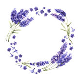 Изолированный венок цветка лаванды Wildflower в стиле акварели бесплатная иллюстрация
