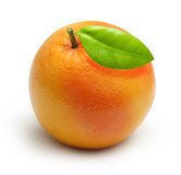 изолированный грейпфрут Стоковая Фотография