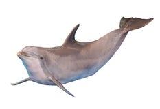 Изолированный дельфин Стоковое Изображение