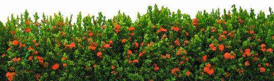Изолированный загородки цветка стоковое фото rf