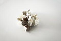 Изолированный ингридиент чеснока Стоковые Фотографии RF