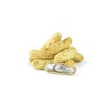 Изолированный кипеть или испаренные свежие арахисы на белой предпосылке Стоковое фото RF