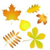 Изолированный комплект простых листьев осени с заполнением градиента, Стоковая Фотография RF