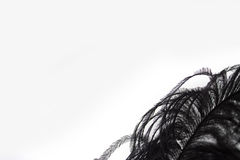 Изолированный конец-вверх черного пера Стоковое Фото