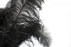 Изолированный конец-вверх черного пера Стоковые Изображения