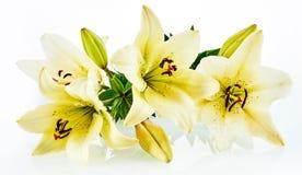 Изолированный корсет желтых цветков Стоковое Изображение