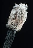 Изолированный, который сгорели макрос спички Стоковое Изображение RF