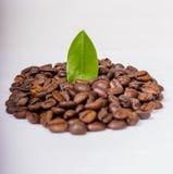 изолированный кофе фасолей Стоковое Изображение RF