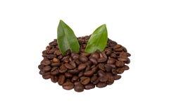 изолированный кофе фасолей Стоковая Фотография