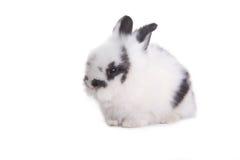 изолированный кролик Стоковое фото RF