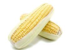 Изолированный кукурузный початок Стоковое Изображение RF