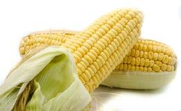 Изолированный кукурузный початок Стоковое Изображение