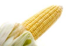 Изолированный кукурузный початок Стоковое Фото
