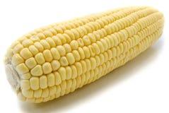 Изолированный кукурузный початок Стоковое фото RF
