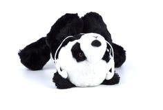 Изолированный медведь панды с человека деятельностью при ежедневно на белизне стоковые фотографии rf