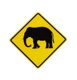 Изолированный дорожный знак скрещивания слона Стоковое Изображение RF