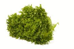 Изолированный салат frisee эндивия Escarole Стоковая Фотография RF